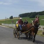 Arbeiten mit den Pferden_1
