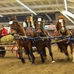 Arbeiten mit den Pferden_2