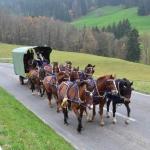 Arbeiten mit den Pferden_3