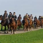 Arbeiten mit den Pferden_4