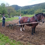 Arbeiten mit den Pferden_5