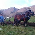 Arbeiten mit den Pferden