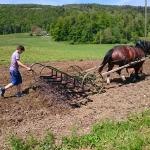 Arbeiten mit den Pferden_7