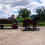 Arbeiten mit den Pferden_8