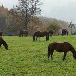 Pferdeimpressionen_1