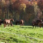 Pferdeimpressionen_2