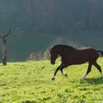 Pferdeimpressionen_3