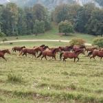 Pferdeimpressionen_4