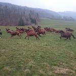 Pferdeimpressionen