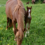 Pferdeimpressionen_8